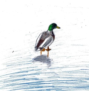 duck on frozen lake