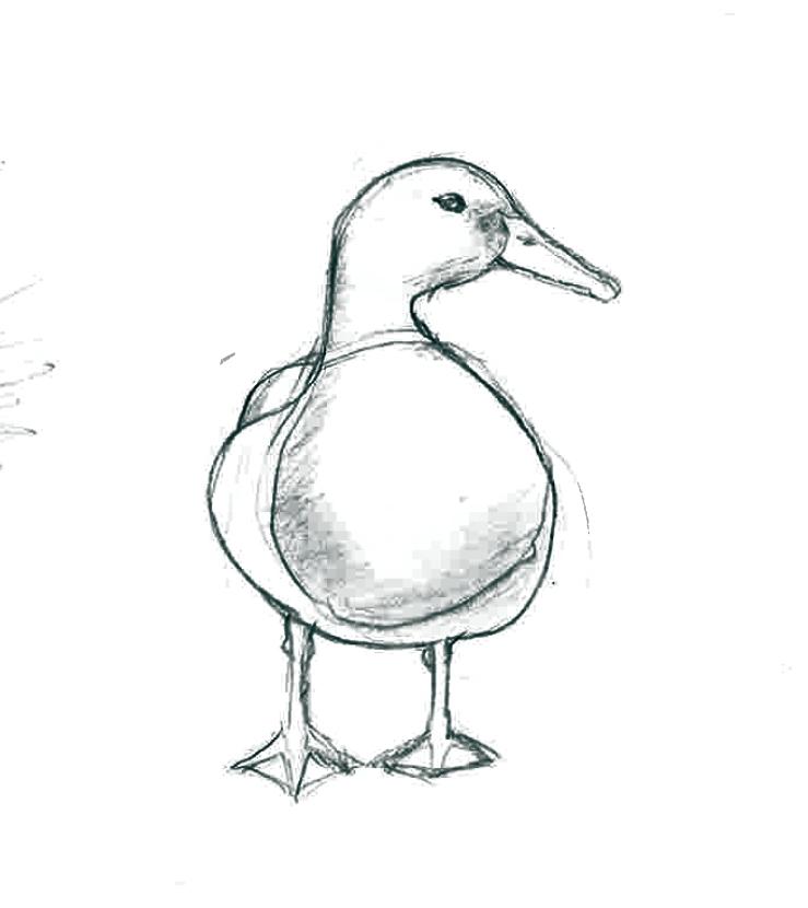 ducksideways